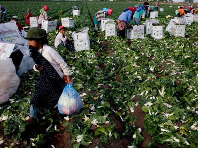 OPINIÓN | De surco en surco: el viacrucis de los jornaleros agrícolas