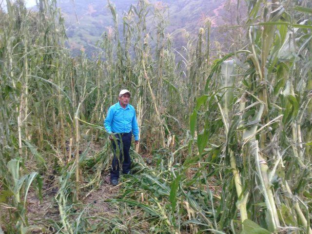 Comunicado | Campesinos de Monte Alegre, denuncian graves afectaciones a su patrimonio por fuerte tormenta