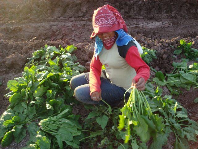 PRONUNCIAMIENTO | Un llamado emergente en atender la vulnerabilidad de la población jornalera en México ante el coronavirus