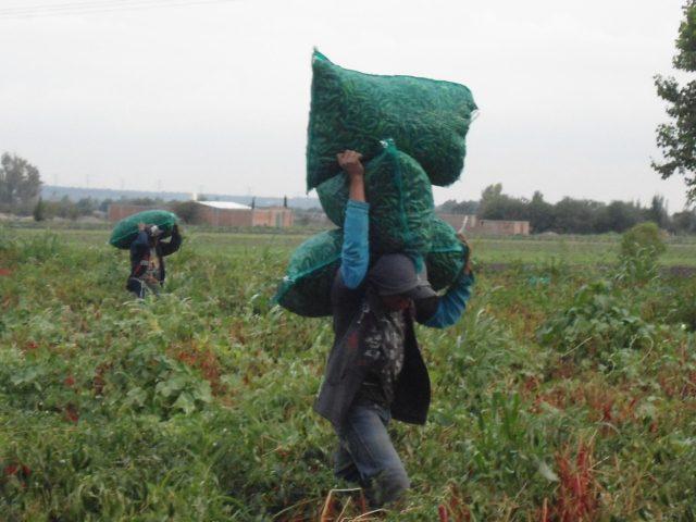 NOTA INFORMATIVA | Familias Me'phaa de la Montaña de Guerrero trabajan en los campos agrícolas en plena pandemia