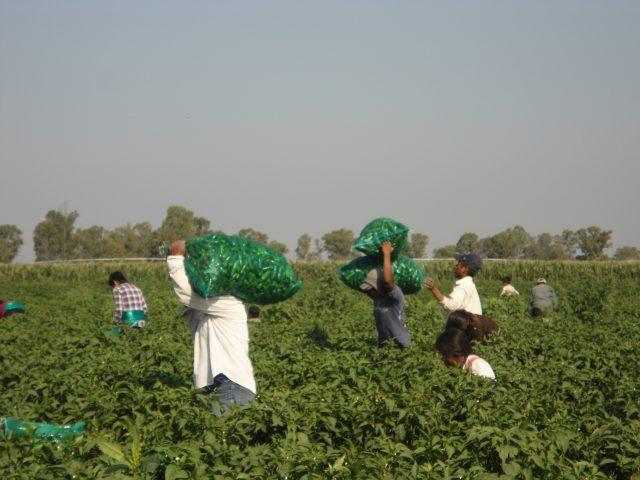 COMUNICADO | En contexto del Covid-19 las y los trabajadores agrícolas en México continúan enfrentando violaciones a sus derechos humanos en los campos agrícolas